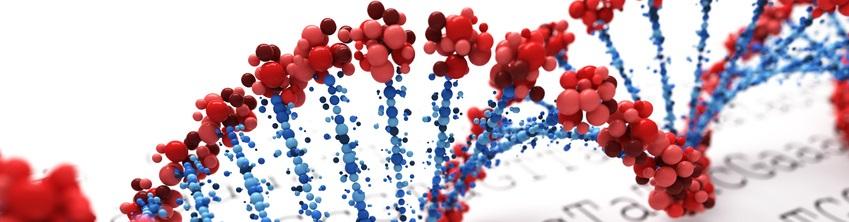Immajg Consult-nos gènes